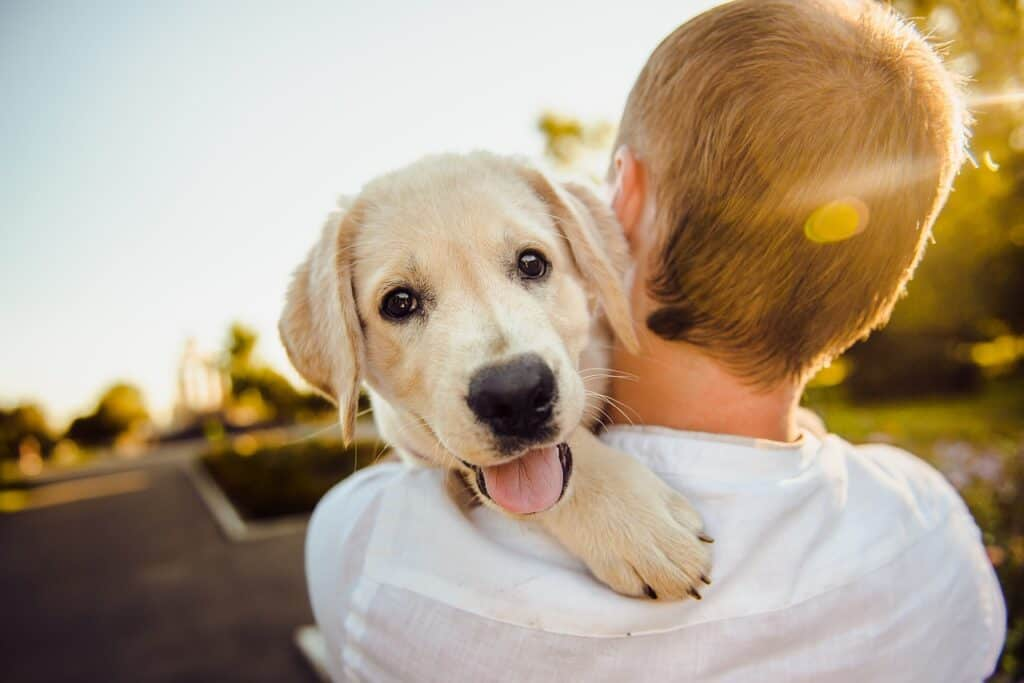 What are the benefits of using relaxing music for dogs?
